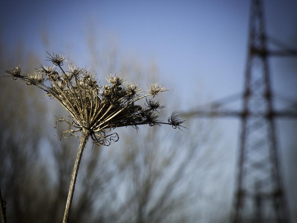 Nature, Landscape, Autumn, Urban, Urbanization, Rural