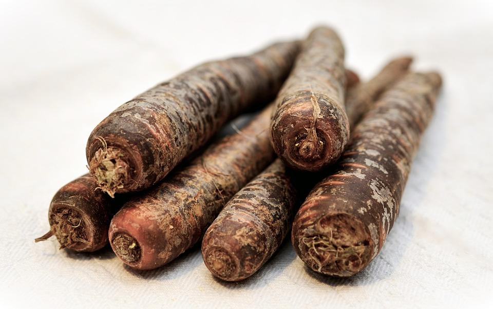 Black Carrots, Urkarotte, Urmöhre, Daucus Carota