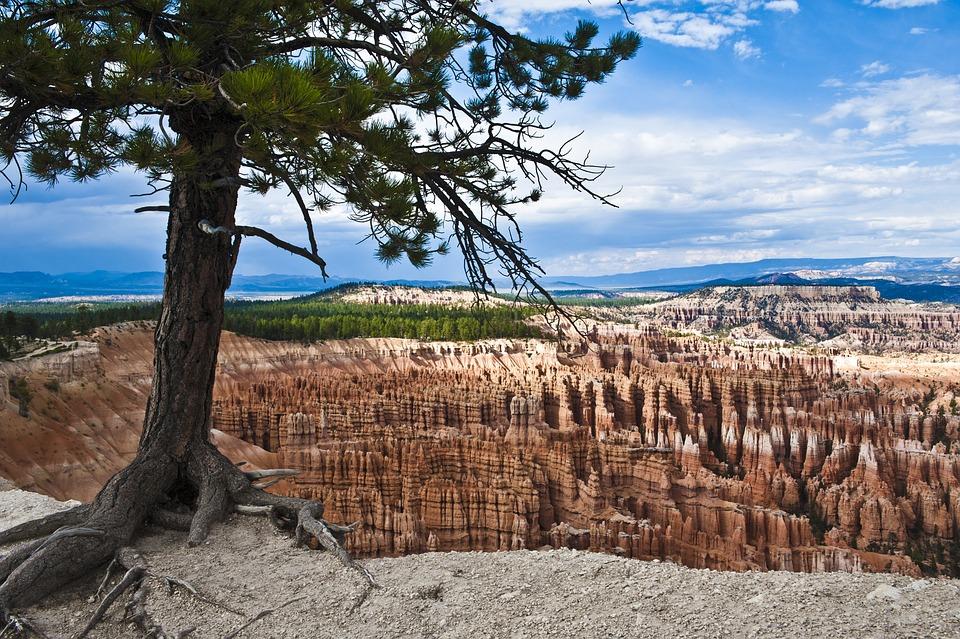 Bryce Canyon, Utah, Usa, National Park, Tree, Root