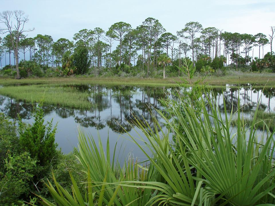 Florida, Nature, Swamp, Plant, Wetland, Usa, Green