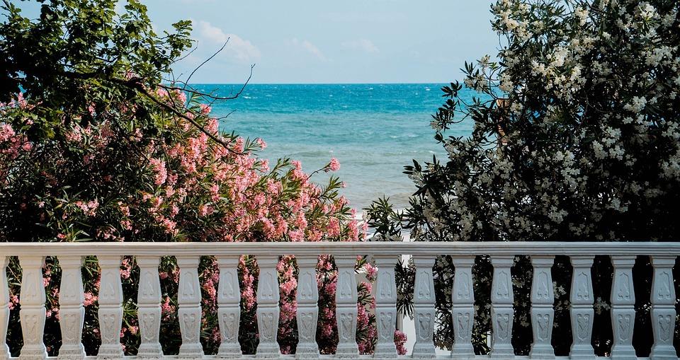Sea, Trees, Plants, Summer, Vacation, Beach, Water