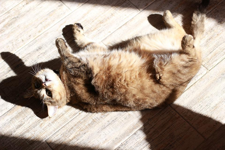 Cat, Sun, Wool, Fur, Shadow, Spring, Relax, Vacation