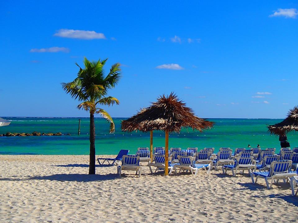 Palm, Tree, Tropical, Vacation, Beach, Hut