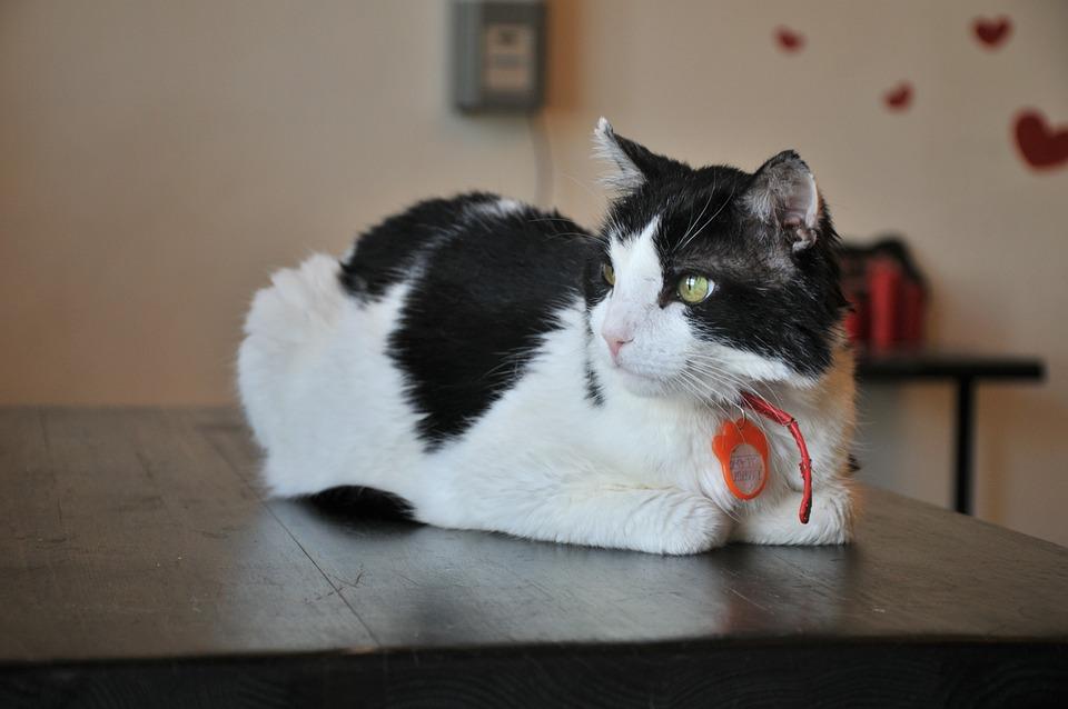 Free Photo Valentine Views Love Black And White Heart Cat Max Pixel