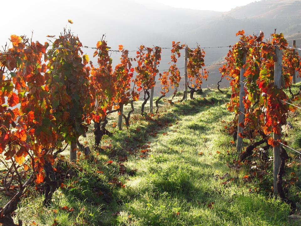 Portugal, Wine, Douro, Vineyard, Valley, Landscape