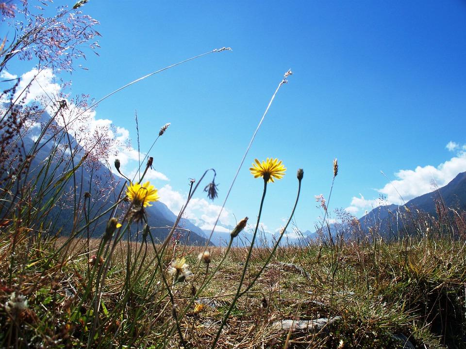 New Zealand, Valley, Scenic, Landscape, Ground, Hetbs