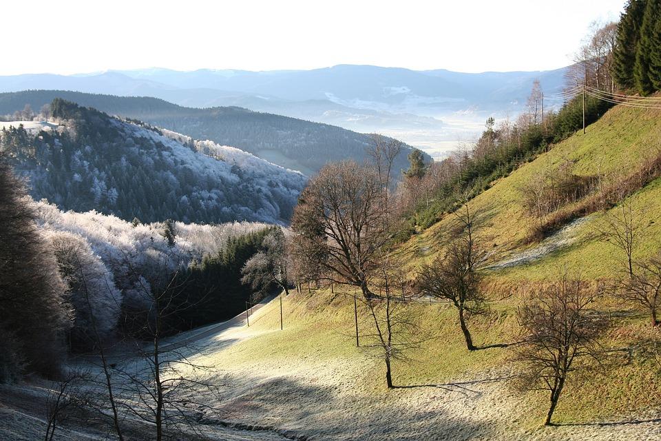 Valley, Morgentau, Black Forest
