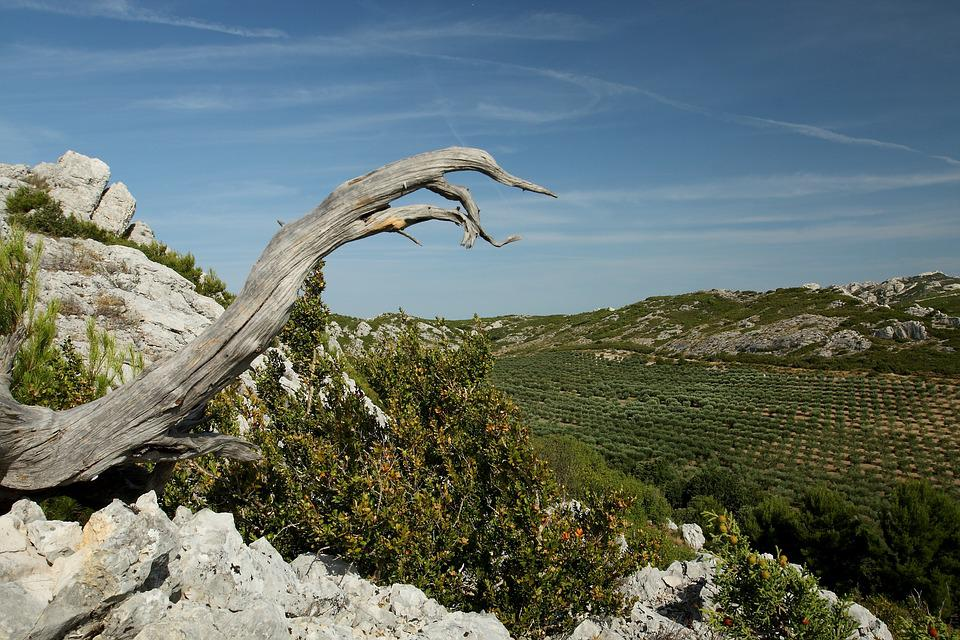 Provence, Alpilles, Valley Of The Fox