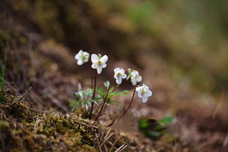 Nature, Valley, Flowers, Plants, Wildflower