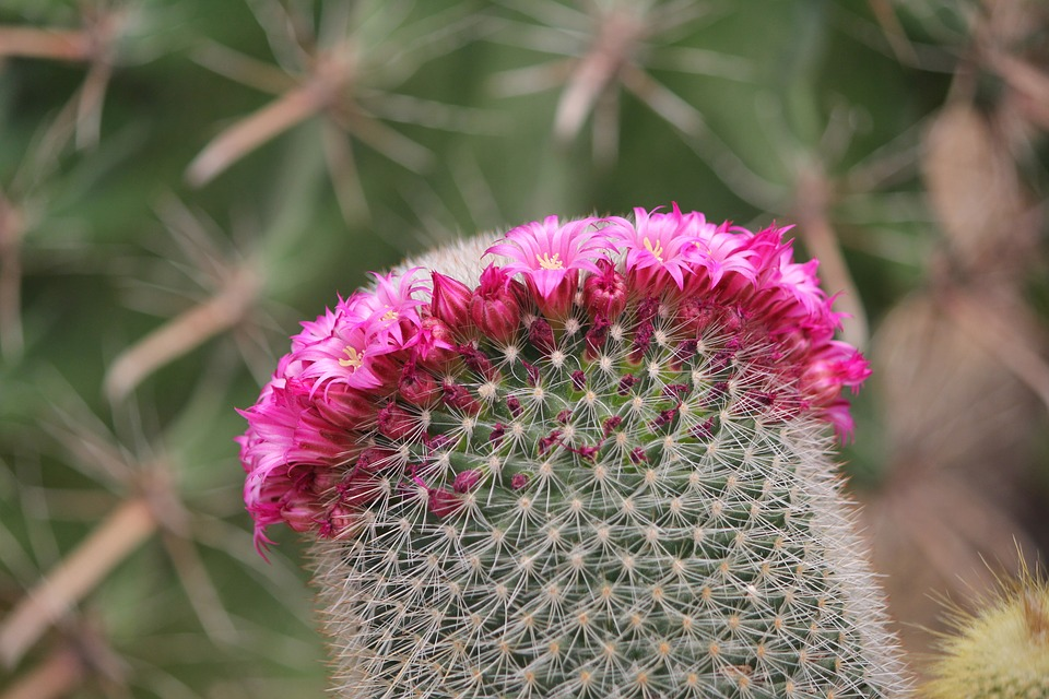 Free photo valor symbiosis cactus flowers thorn max pixel cactus thorn flowers valor symbiosis mightylinksfo