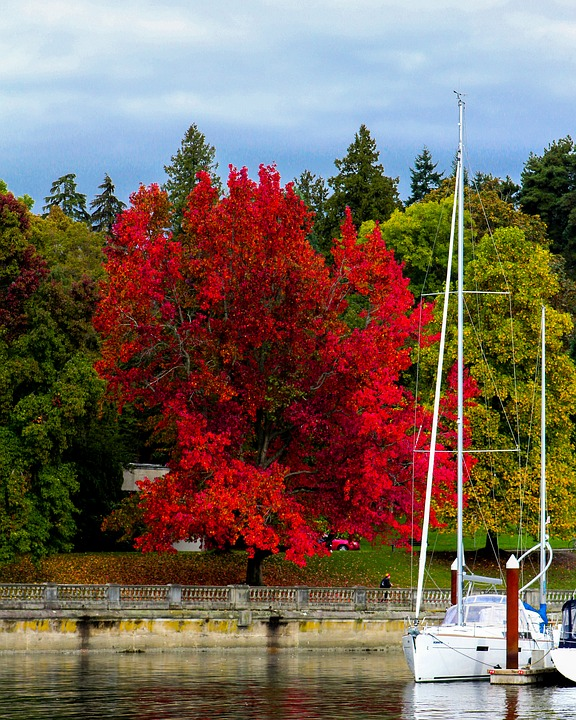 Stanley Park, Fall, Autumn, Vancouver, British Columbia