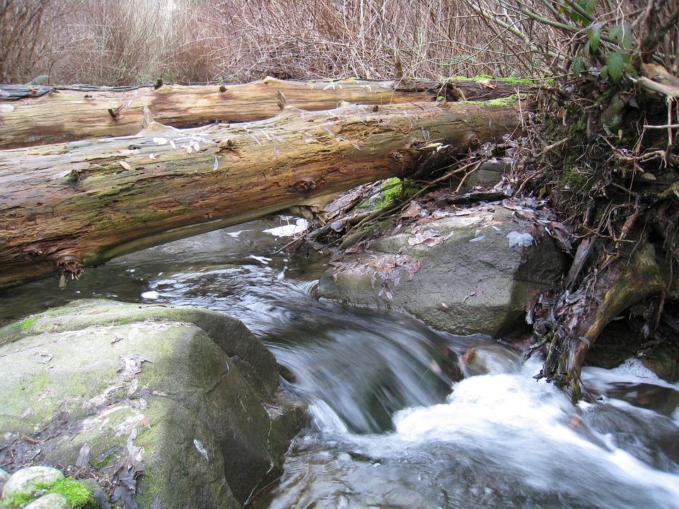 Stanley Park, Vancouver, Water, Brook, Stream, Wood