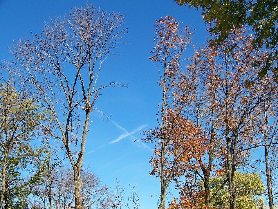 Jet, Vapor, Trail, Airplane, Blue, Sky, Fall, Autumn