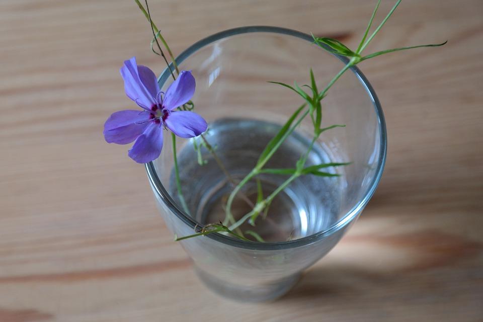 Sky Rose, Flower, Blossom, Bloom, Glass, Vase, Blue