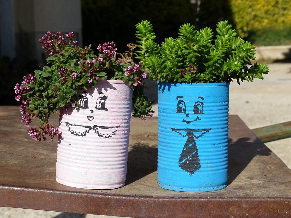Succulent Plant, Composition, Fat Plants, Green, Vase