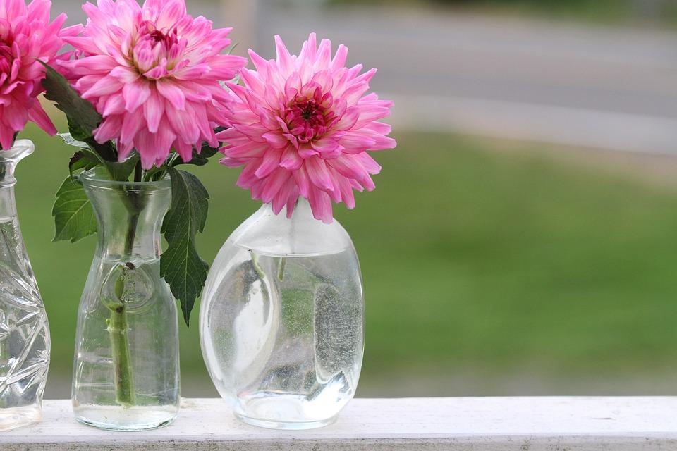 Dahlia, Vase, Flower, Nature, Pink, Large Flowers