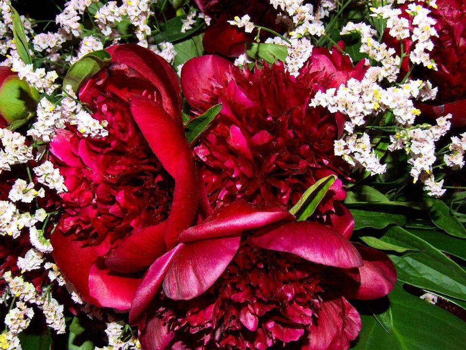 Peonies, Flowers, Red, Garden, Rosa, White, Vase, Deck