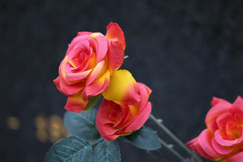 Decoration, Red Yellow Roses, Vase, Colorful