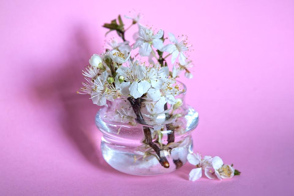 Plum Blossom, Flowers, Vase, Spring Flowers