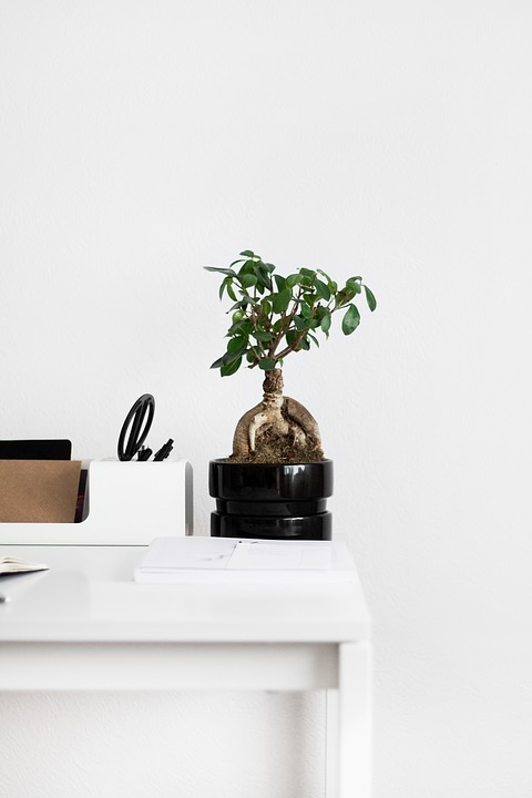 Free Photo Vase Tree White Table Notebook Flowerpot Plant Max Pixel