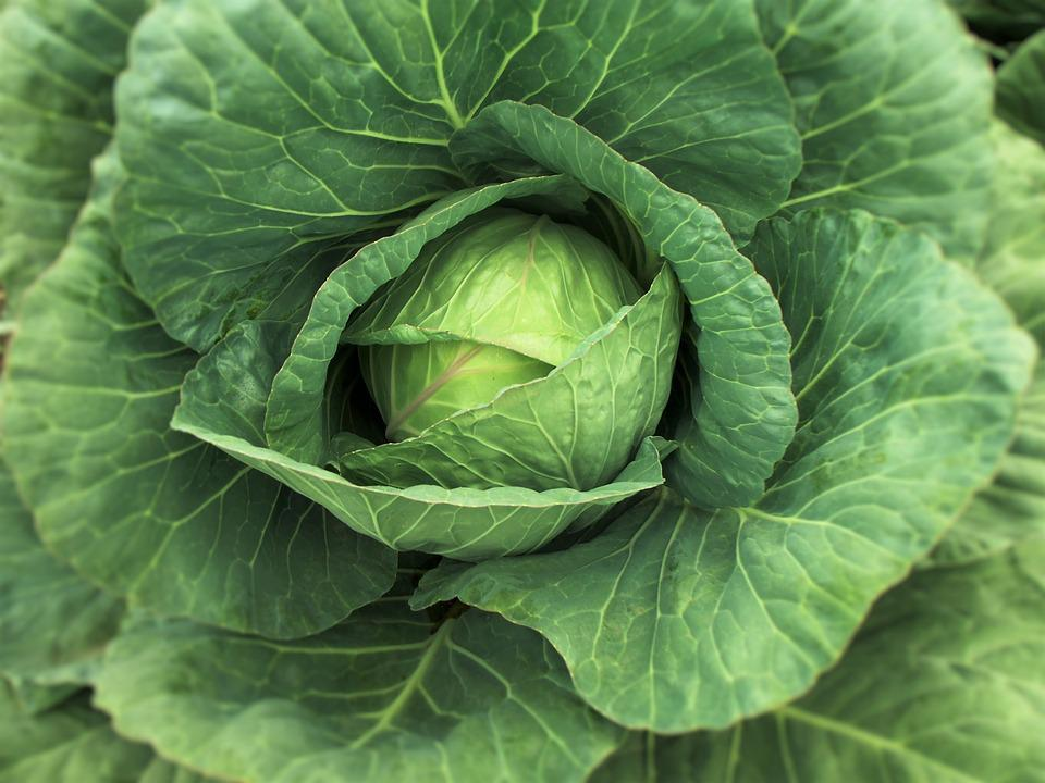 Col, Cabbage, Vegetable, Cabbages, Vegetables, Nature