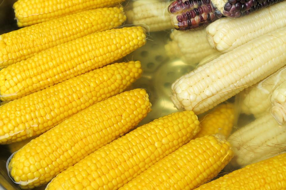 Corn, Vegetable