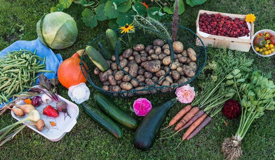 Autumn, Harvest, Garden, Vegetables, Vegetable Garden