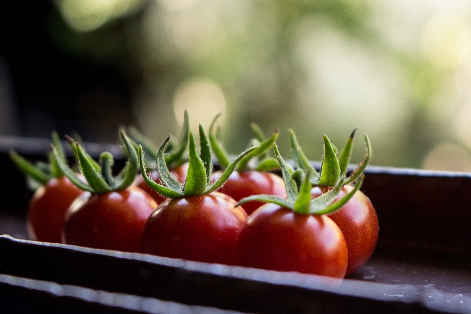 Tomatoes, Garden, Green, Food, Vegetable, Agriculture