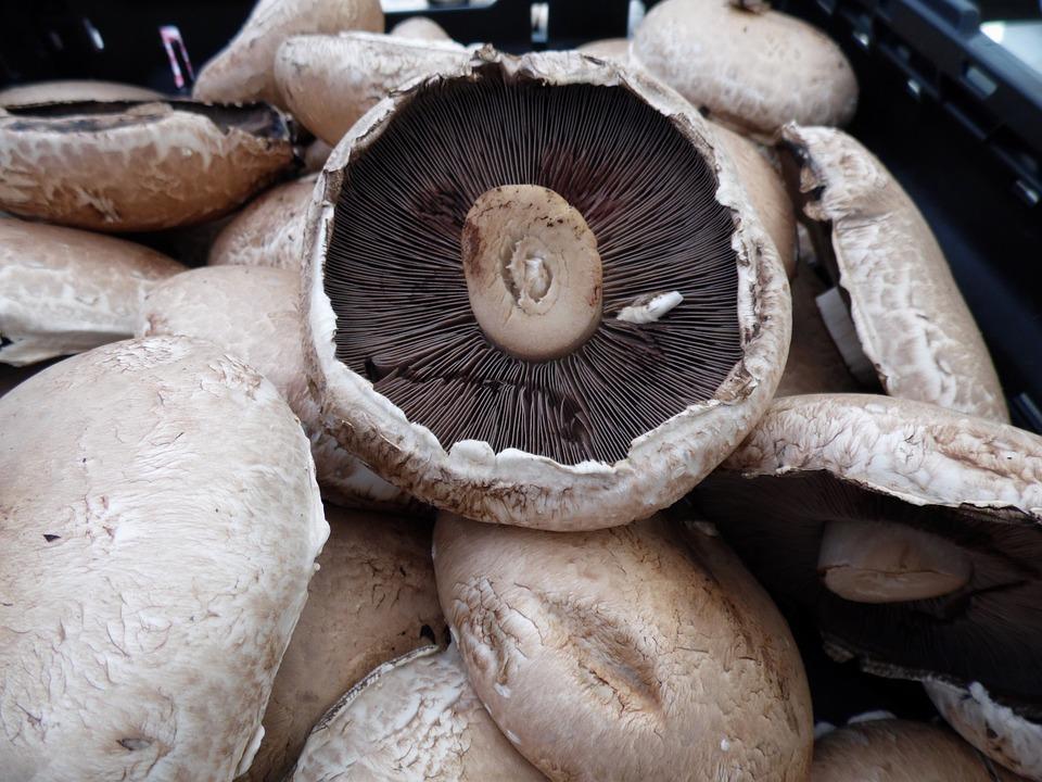 Portabella, Mushrooms, Fungi, Vegetable, Food, Healthy
