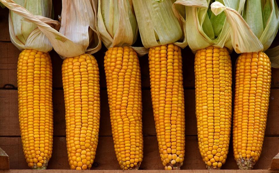 Corn, Vegetable Mais, Corn On The Cob, Vegetables