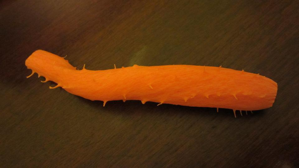Carrot, Vegetable, Orange