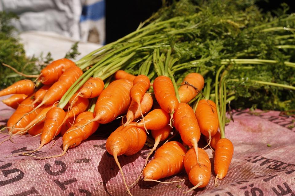 Vegetable, Carrot, Outdoor