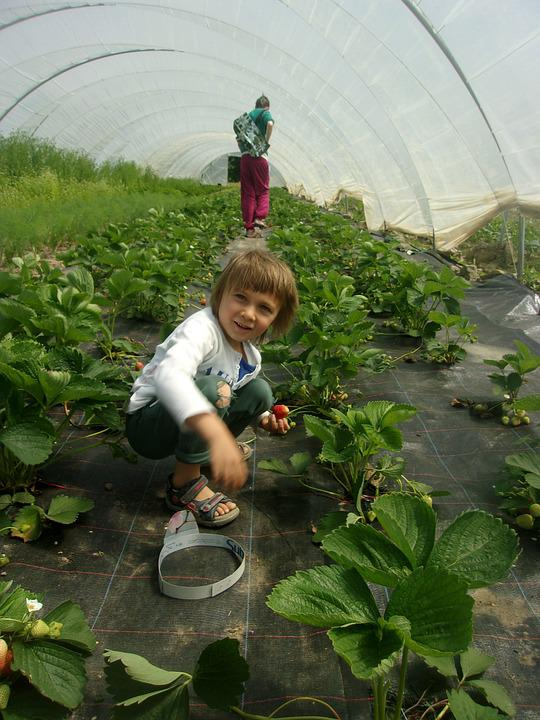 Bio, Vegetables, Csa, Agriculture