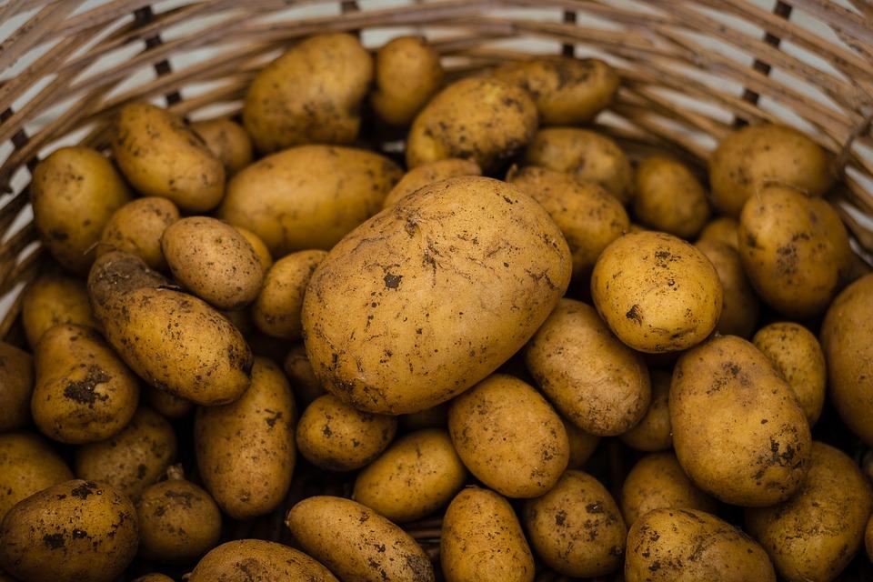 Potato, Potatoes, Vegetables, Food, Harvest, Fresh, Eat