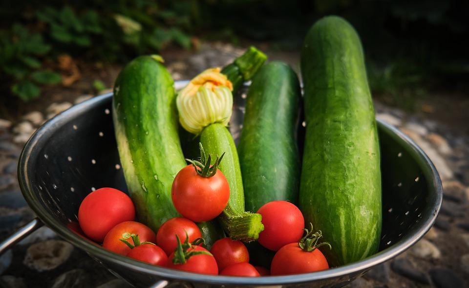 Harvest, Vegetables, Tomato, Cucumber, Zucchini, Fresh