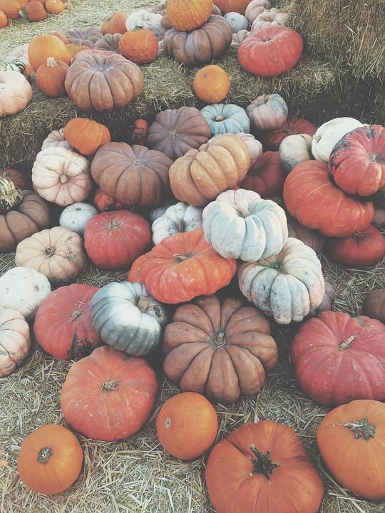 Vegetables, Halloween, Pumpkin, Pumpkins, Fresno