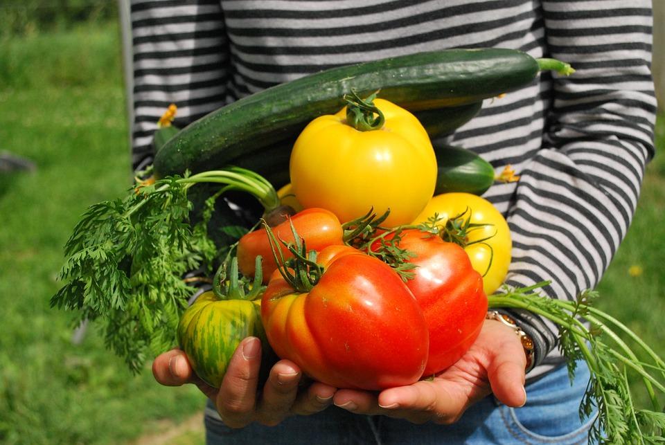Vegetables, Gardener, Vegetable Garden