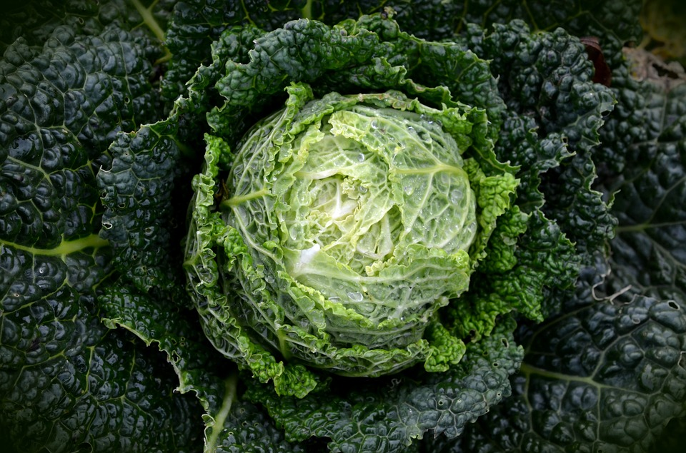 Savoy, Kohl, Vegetables, Healthy, Savoy Cabbage, Green