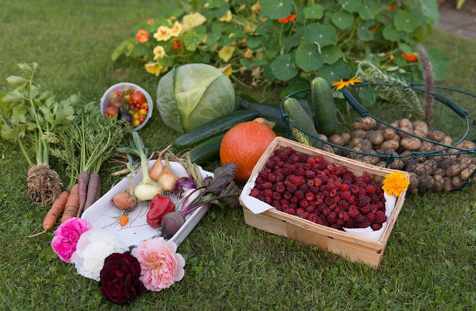 Free photo Vegetables Vegetable Garden Garden Harvest Autumn Max