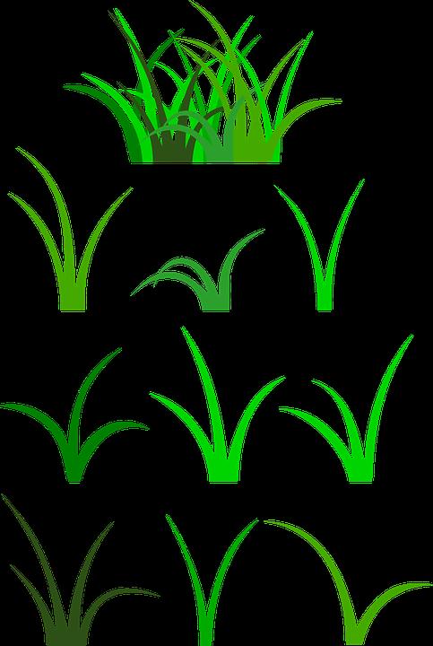 Grass, Green, Plant, Vegetation