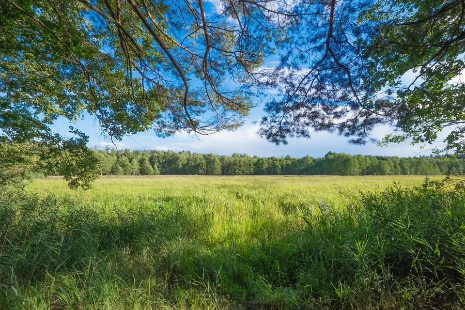 Forest, Green, Landscape, Vegetation, Summer, Foliage
