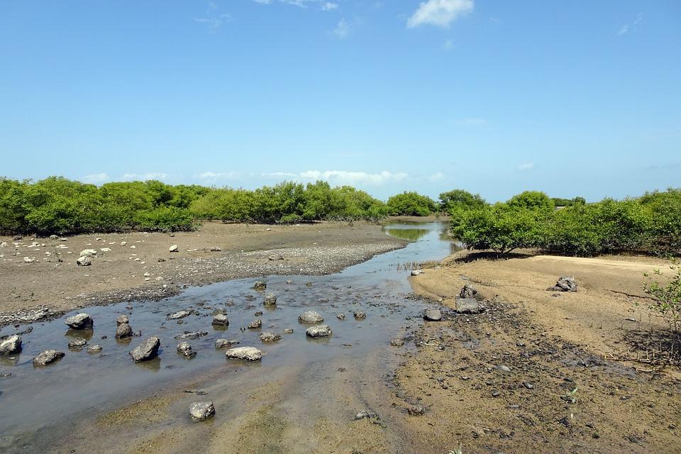Mangroves, Creek, Vegetation, Forest, Swamp, Habitat