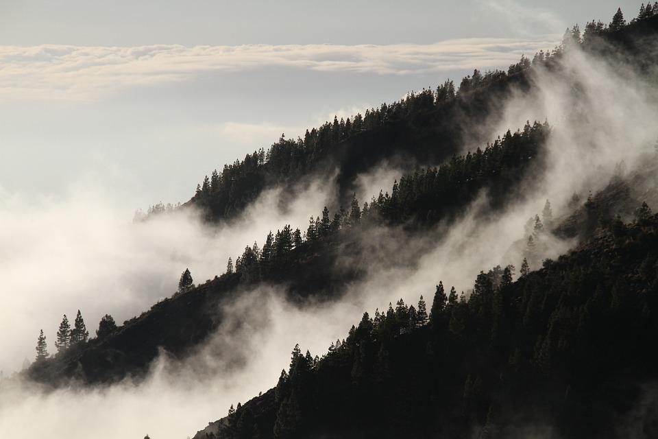Fog, Forest, Mist, Mysterious, Vegetation