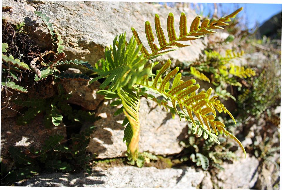 Fern, Nature, Vegetation, Natural, Green, Plant