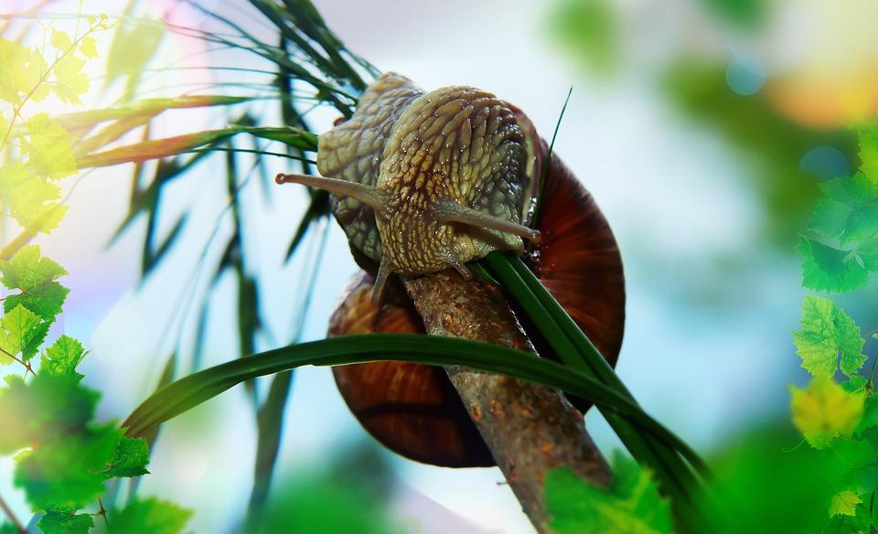 Winniczek, Molluscum, Sprig, Forest, Vegetation