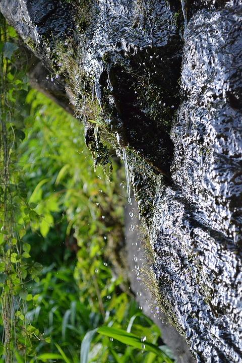 Water Drops, Water, Drip, Spring, Wet, Vegetation, Moss