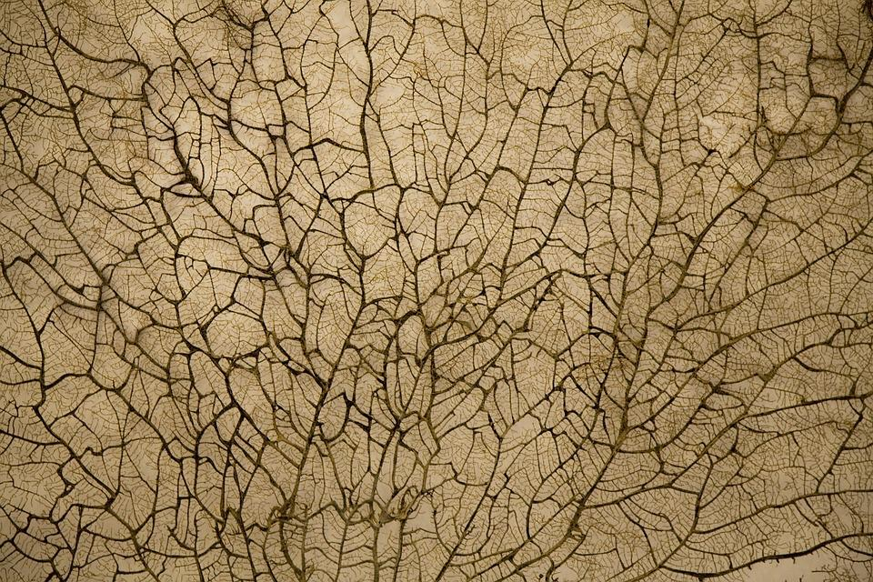 Texture, Vein, Branch, Nature, Flora, Plant, Old
