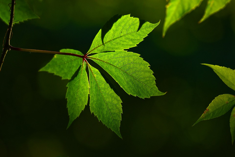 Leaf, Vein, Pattern, Texture, Plant, Backlight