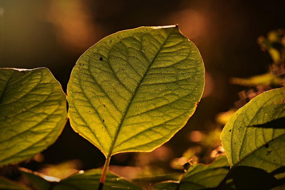 Leaf, Foliage, Vein, Pattern, Branch, Texture, Nature