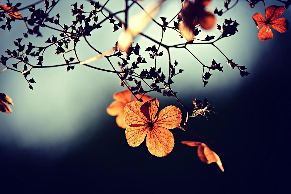 Flower, Branch, Twig, Autumn Color, Petal, Vein
